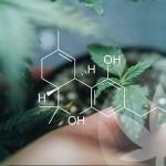 Waarom zijn ruwe cannabinoïden zo speciaal?