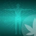 Wat is klinische endocannabinoïde-deficiëntie?