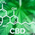 Het interview van Cibdol's e-commerce manager door DrugsInc