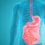 Kan CBD de darmgezondheid en spijsvertering ondersteunen?